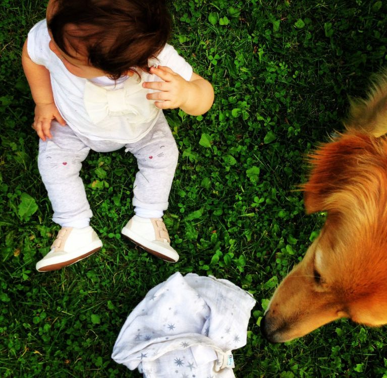 Dziecko a pies. Jak przygotować psa na dzieciaka?