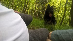Zdjęcia z lasu