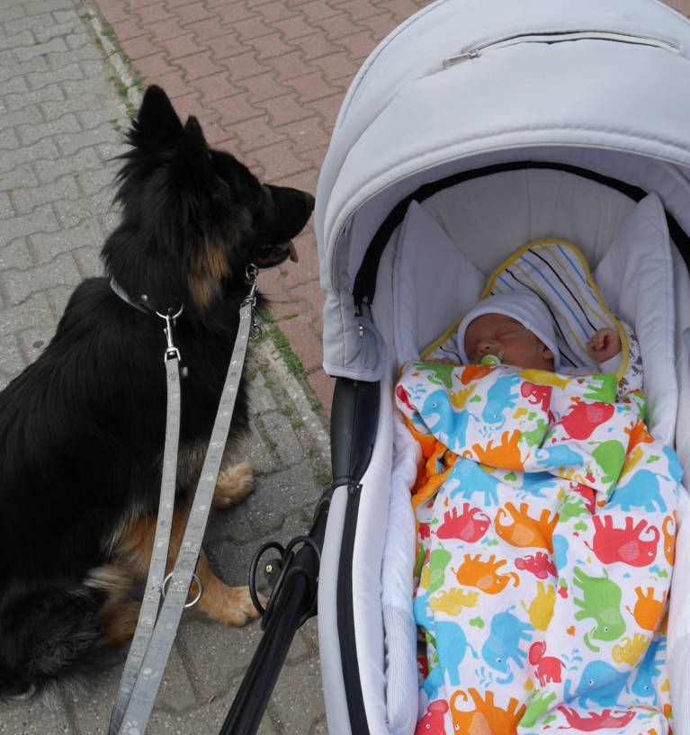 Pierwszy spacer z ośmiodniowym Andrzejkiem. I z żoną i z psem ;-)